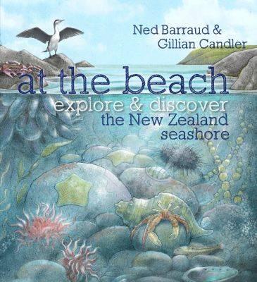 At the Beach: Explore & Discover the New Zealand Seashore