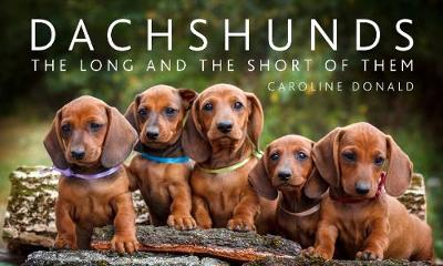 Dachshunds: The Long and the Short of Them
