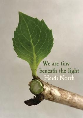 We are tiny beneath the light